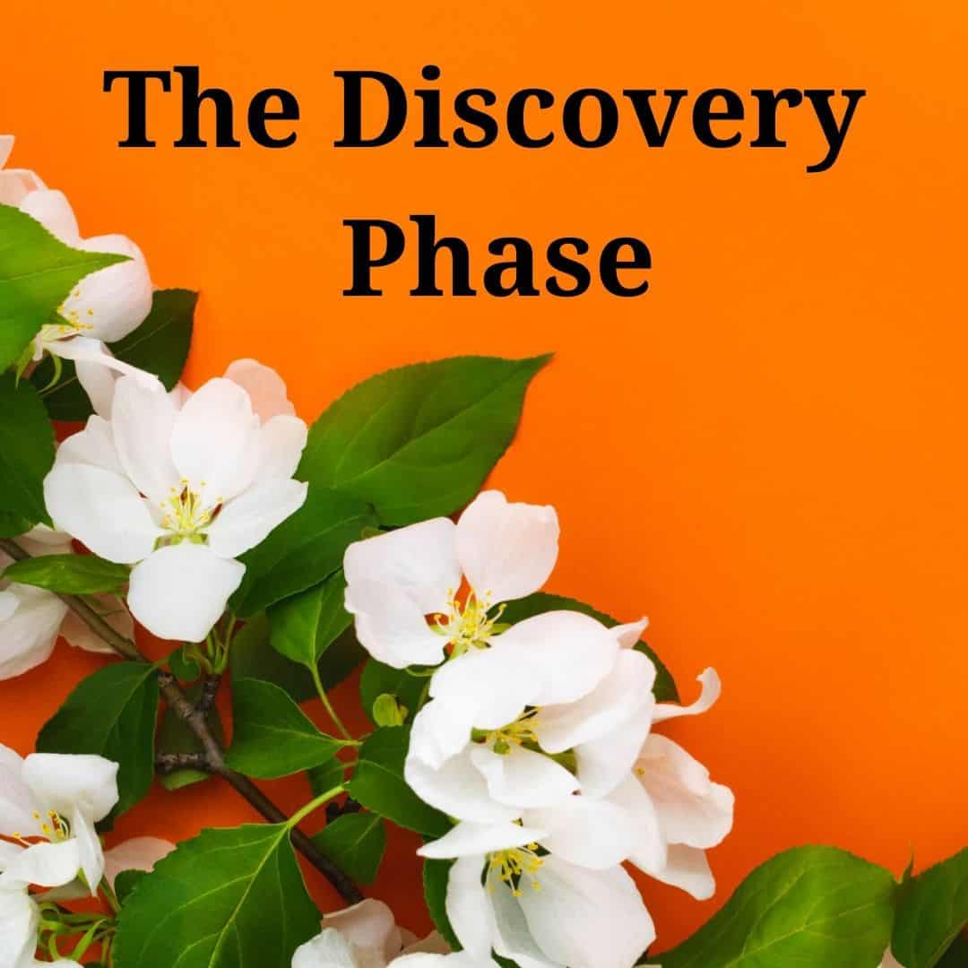1 The Discovery Phase